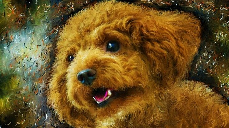 #トイプードル #イラスト 以前にお絵描きした愛犬ティアモの絵です。  映画「男と女」の芸術的な映像カットシーンに、音楽はサントラでは無くシャンソン男性歌手の歌が如何にもサウンドトラックかの様に聴こえてくるのが不思議でした、これを制作した人に拍手です。 Vincent Delerm - Deauville Sans Trintignant - Un Homme Et Une Femme http://youtu.be/sML0Udcr5N4