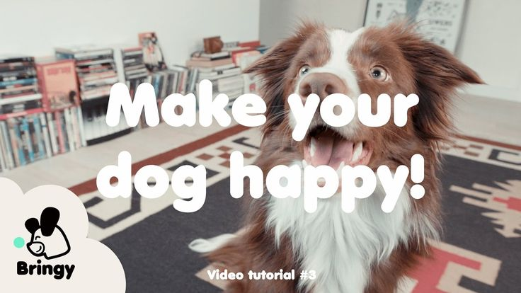 What makes your dog truly happy? - lifehack #3 by Bringy