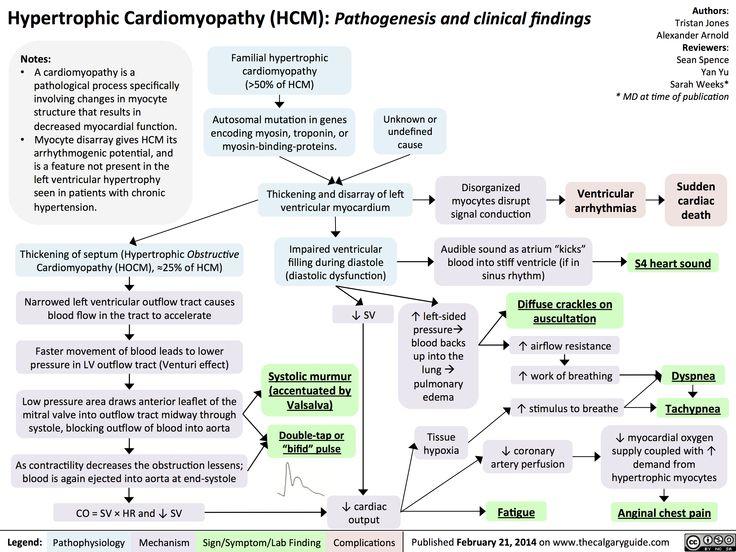 Hypertrophic Cardiomyopathy (calgaryguide.ucalgary.ca).