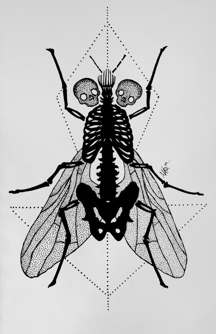 Fly Dotwork Tattoo by MaryMaryLP.deviantart.com on @DeviantArt