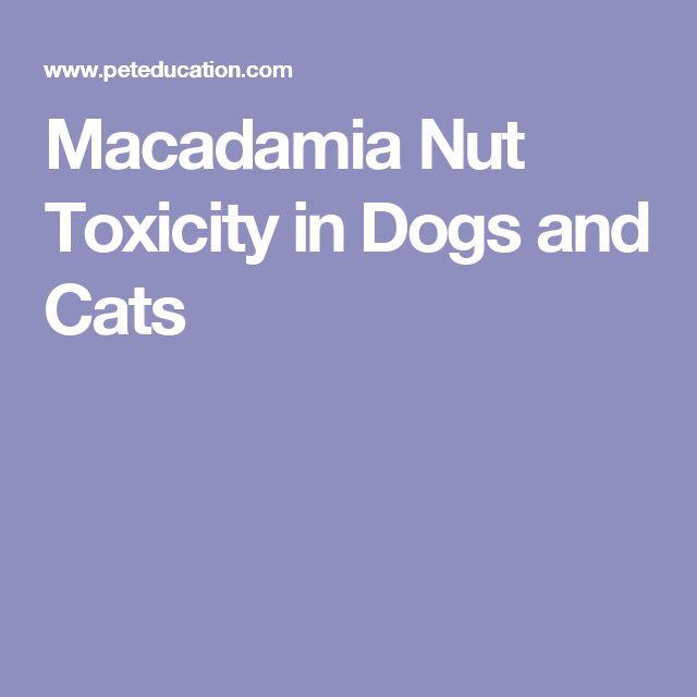 Australian Nut Poisoning in Dogs