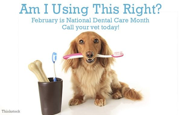 Primova Don T Forget Dental Care What Would Happen To Your Teeth If You Never Brushed Them They D Decay And Eventually Fall Out Your Pets Dog Teeth