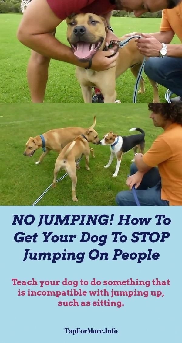 Stop Dog Jumping And Training Dogs Tricks Check The Picture For