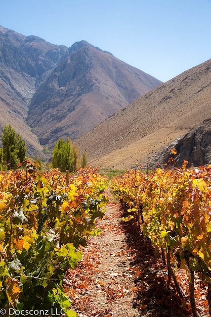 Viñedos de Alcohuaz Elqui Valley, Chile