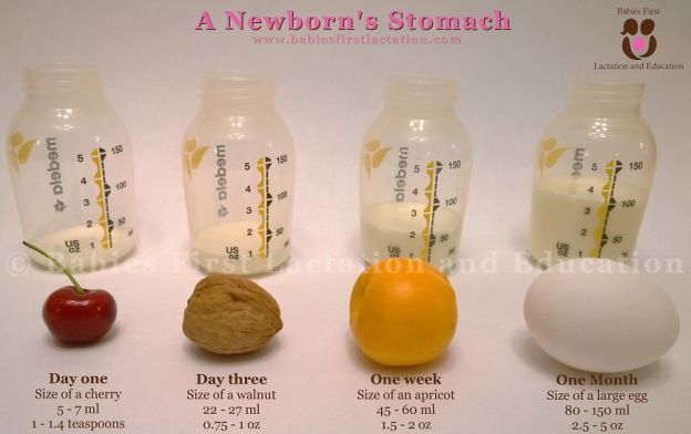 Tummy size of newborn to 1 month old.  good to see to help mama not freak out that she's not getting enough-Babies First Lactation and Education