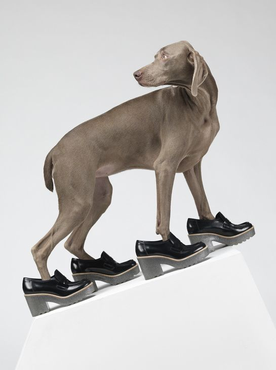 William Wegman pour Acne http://www.vogue.fr/mode/news-mode/diaporama/acne-william-wegman-chien-braques-de-weimar/12244#3