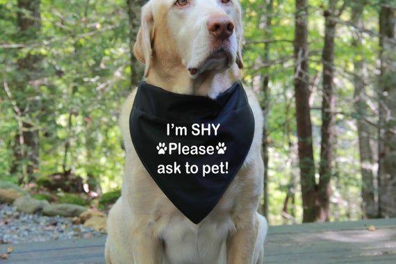 I M Shy Dog Bandana Over The Collar Bandana Rescue Dog Bandanas