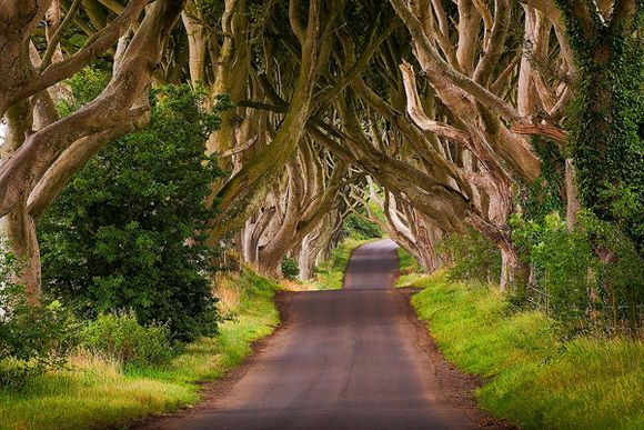 """""""The Dark Hedges""""; Northern Ireland.   THE WORLD GEOGRAPHY: 8 of the Most Unique Paths in the World"""