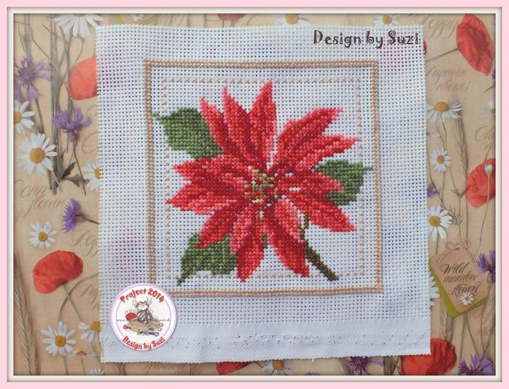 Project 2014: 40/40 Poinsettia (EMS Project 2010)