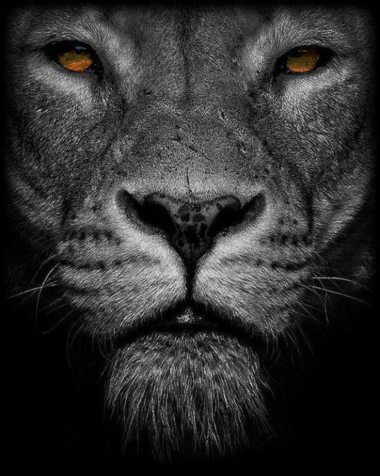 ~Black lion~Rare beauty?