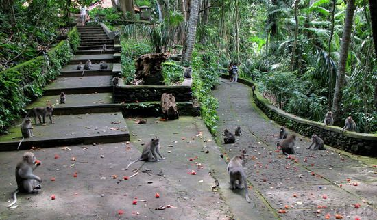 Sacred Monkey Forest Sanctuary in Ubud