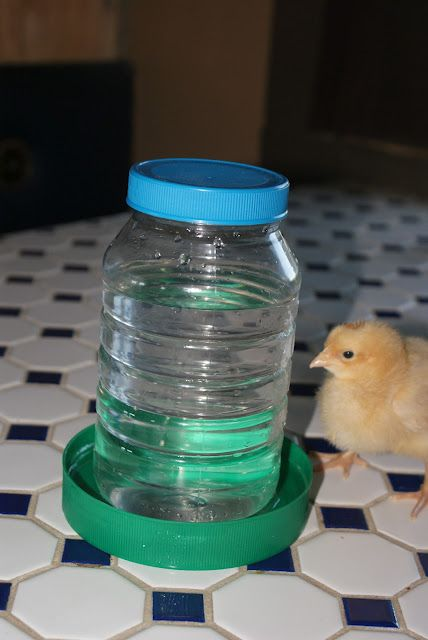 A Quick DIY Chick Feeder/Waterer from Off the Grid at -30: Frugal Tuesday - uses old plastic containers you're probably planning to recycle anyway