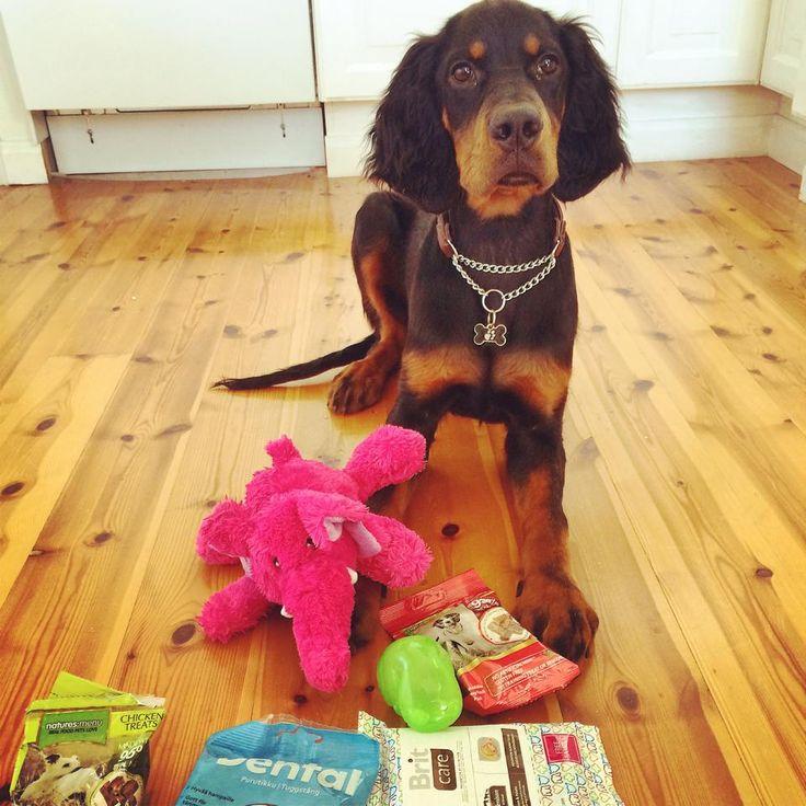 Tiko - DoggieBag.no #DoggieBag #Hund