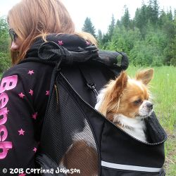 51 best images about Adorable Dogs in Backpacks on Pinterest ...