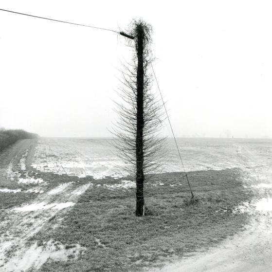 Pole Tree, Delaware, 1999