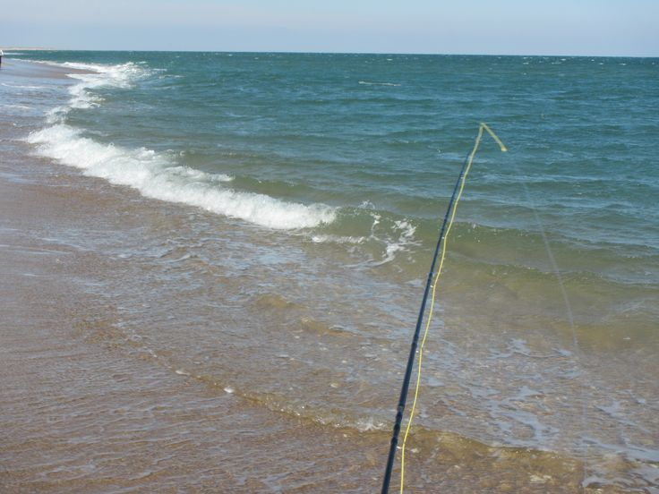 59 best saltwater images on pinterest aquarium board for Outer banks surf fishing tips