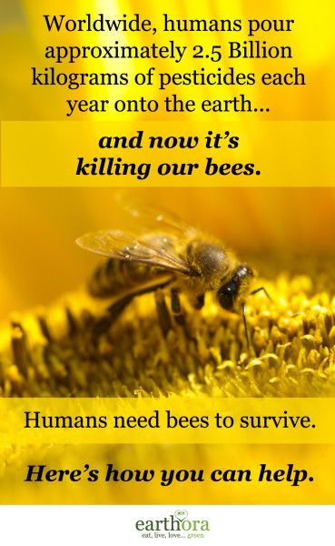 All over the world, bees are dying at an alarming rate due to the 2.5 billion kilos of pesticides we pour onto the earth each year. Here are 7 ways you can help save our bees.