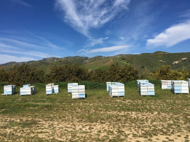 Keith's hives against a beautiful sky
