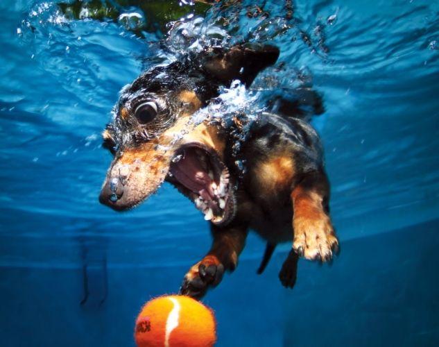 """""""Underwater dogs"""" by Seth Casteel / """"Chiens sous l'eau"""" de Seth Casteel"""