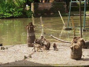 Taman Satwa Cikembulan, Wisata Kebun Binatang Kabupaten garut - Galih Pamungkas