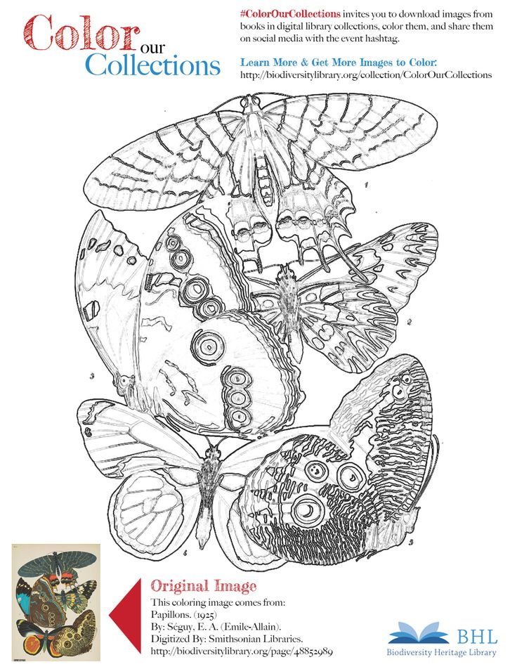 """#ColorOurCollections. Original Image: http://biodiversitylibrary.org/page/48852989. To download this image, right click on the pin and choose """"save image as"""" to save the image to your computer. You can then print and color at your leisure!"""