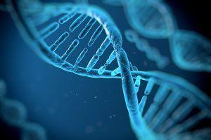 Les nucléotides : actifs révolutionnaires ! Les nucléotides sont des constituants élémentaires de l'ADN et de l'ARN.  L'ADN (acide désoxyribonucléique) est la substance à l'intérieur de chaque cellule qui porte notre code génétique (génome). Les nucléotides sont les briques de construction de l'ADN et de l'ARN (acide ribonucléique) qui correspondent au segment d'ADN constituant le gène. La suite logique de ces nucléotides constitue le code génétique.