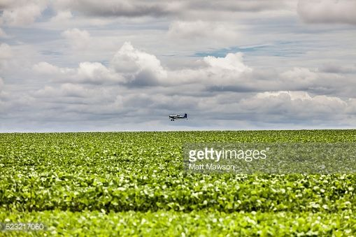 Stock Photo : Soybean Fields in the Mato Grosso State Brazil