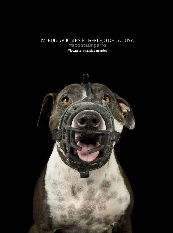 Por qué una ONG | Fotopets - Retratistas animales