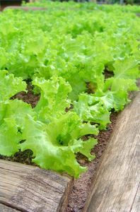 How to plant a raised vegtable garden - great idea - love all that green.