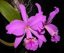 flor nacional de colombia nombre - Buscar con Google