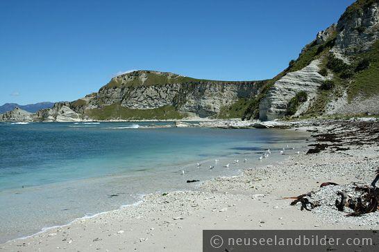 http://pictures-of-newzealand.com/img/nz-kaikoura-027.jpg