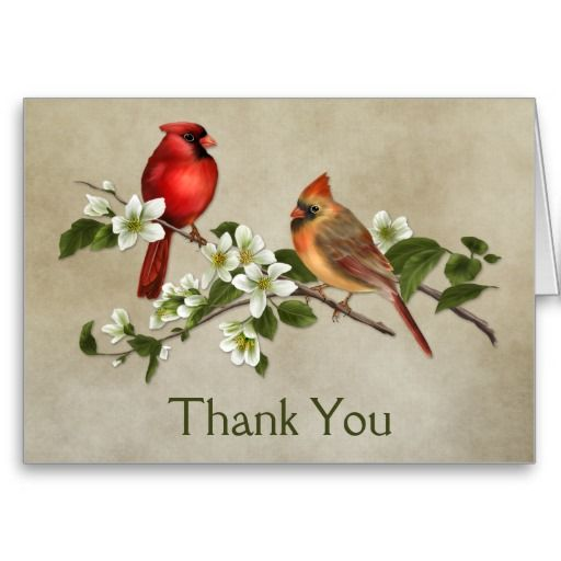 Male Female Cardinals Dogwoods Thank You Note Card -6479