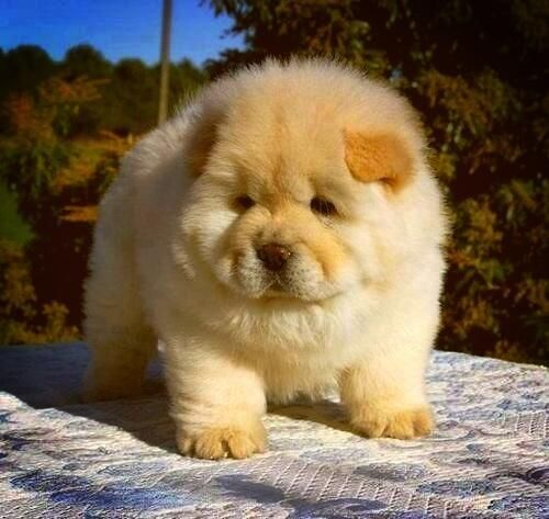 Awwwwwww Cute and Cuddly Baby Animals - instant pick-me-up!!