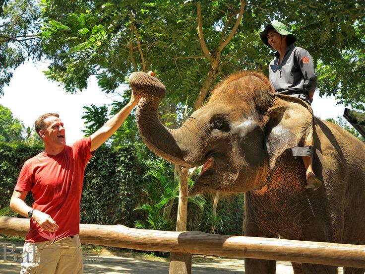 Elephant at Bali Zoo - Singapadu, Gianyak, Bali || www.BaliHotelGuide.com