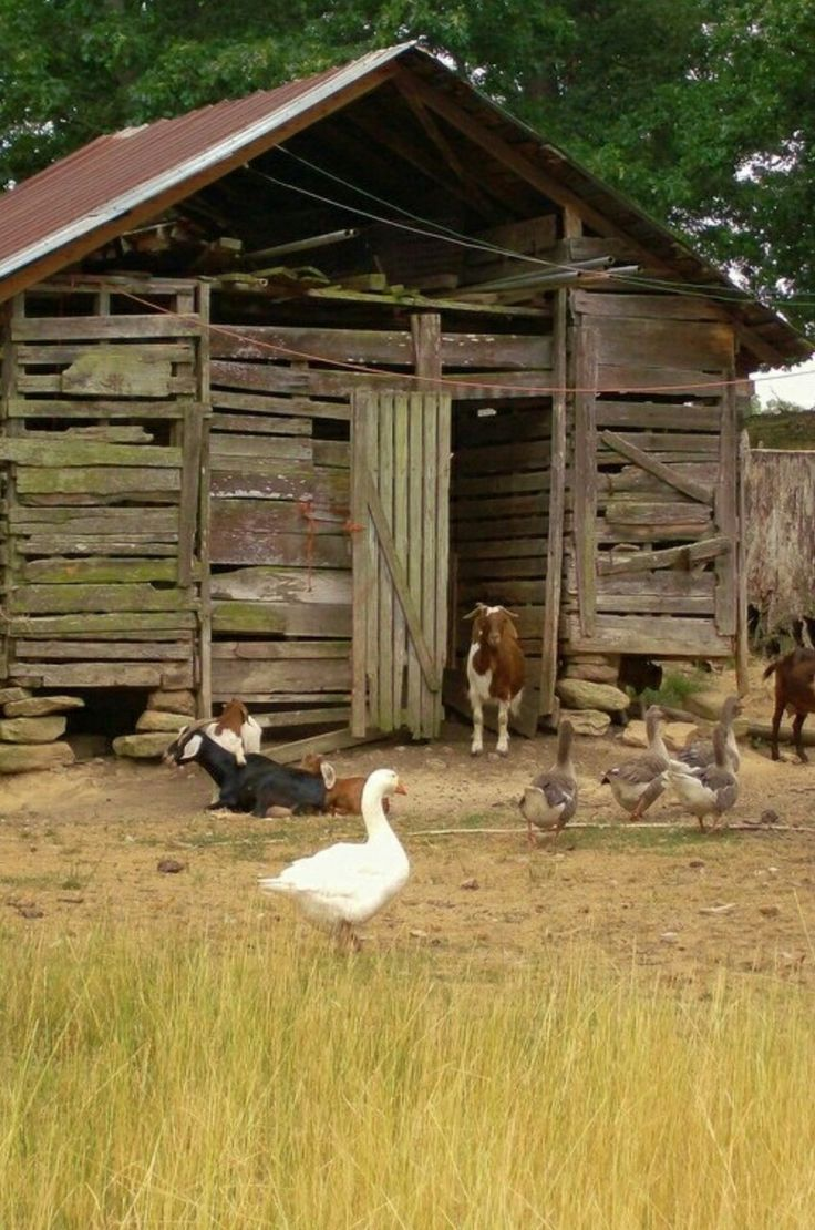 I want a small farm so badly. Just want to be in the country