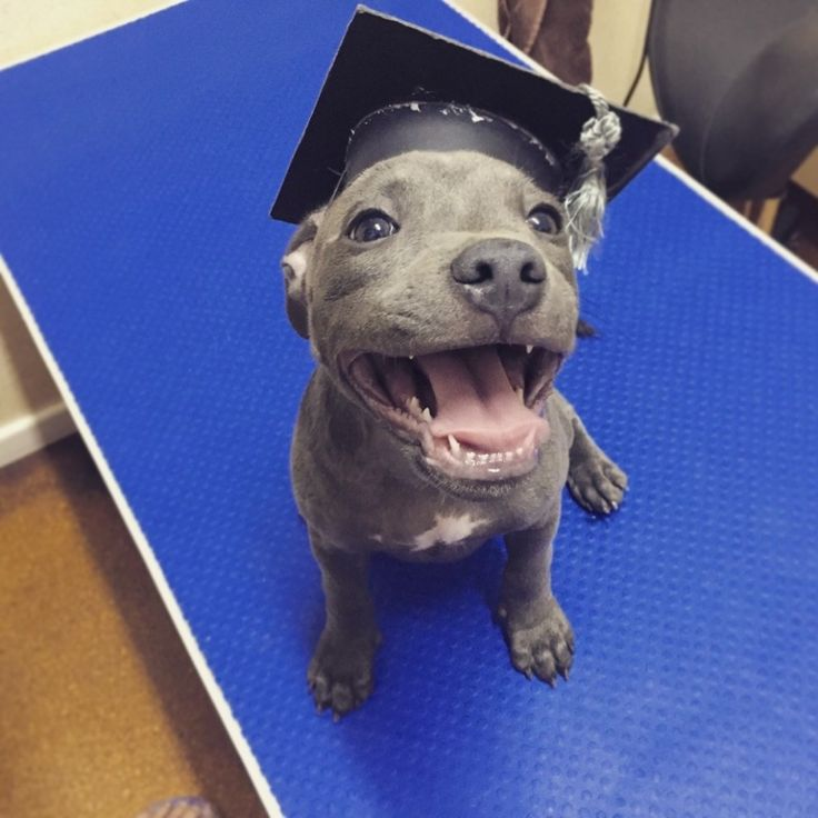 And this proud woman who just graduated from puppy school.