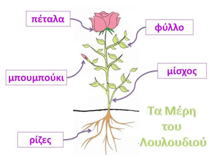 Νηπιαγωγός για πάντα....: Μελέτη Περιβάλλοντος,Γλώσσα,Τεχνολογία : Λουλούδια