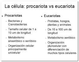 Resultado de imagen para celula eucariota o procariota