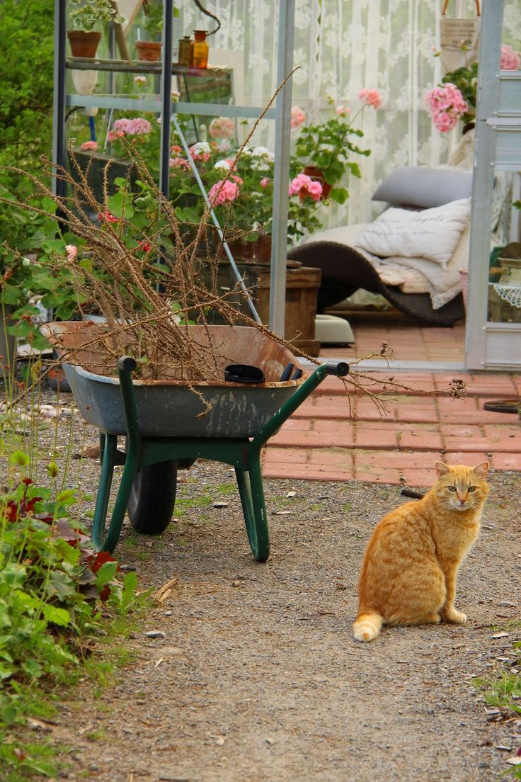 59 best Greenhouse lifestyle in Ruusunmekko images on Pinterest ...