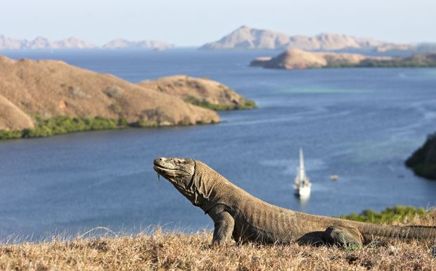Komodo island, Nusa Tenggara, Indonesia