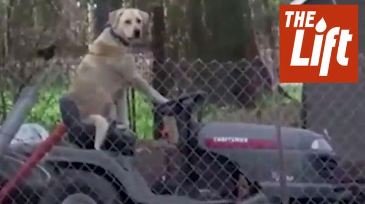 While reporting on the flooding in the South a Texas reporter spotted this dog hanging out on a lawn mower.