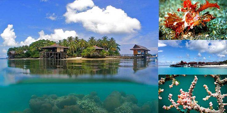 The Underwater Beauty of Maratua Island, Kalimantan | Indonesia Travel