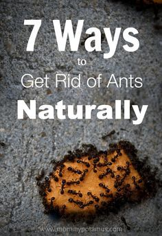 """No up""""hill"""" battle! Safe, non toxic Ways To Get Rid Of Ants Naturally ***Clove essential oil"""