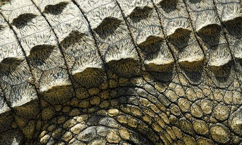 33 Sets Of High Quality Reptile Skin Texture Texture