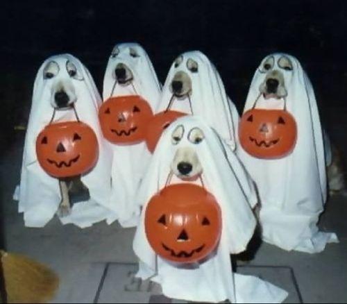 #dogs #halloween #trickortreat