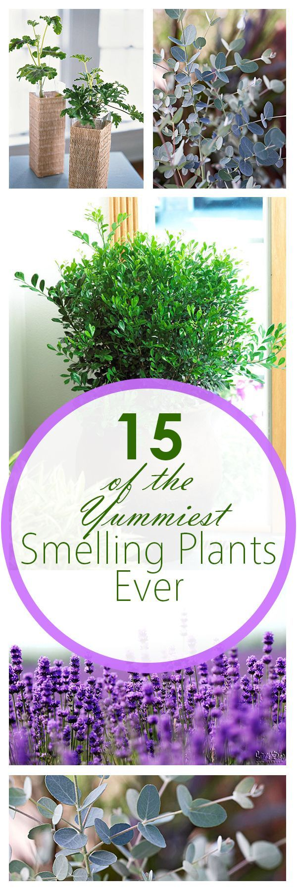 15 of the Yummiest Smelling Plants Ever