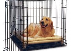 Need a crate bed for Bailey  Kuranda Dog Beds - Orthopedic and Chew Proof Dog Beds