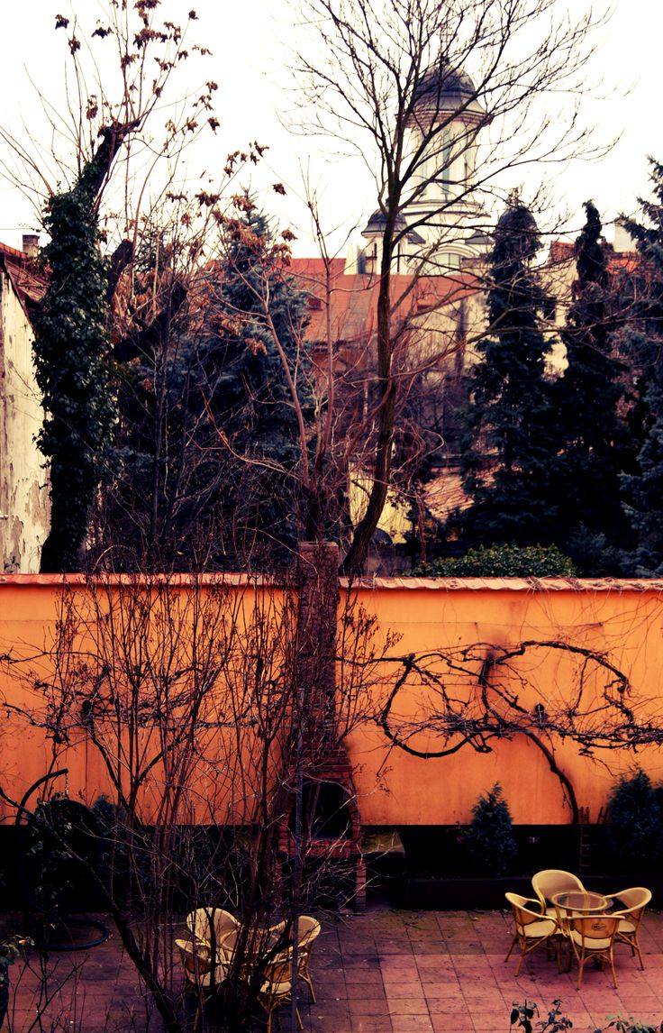 A warm winter afternoon in our lovely garden