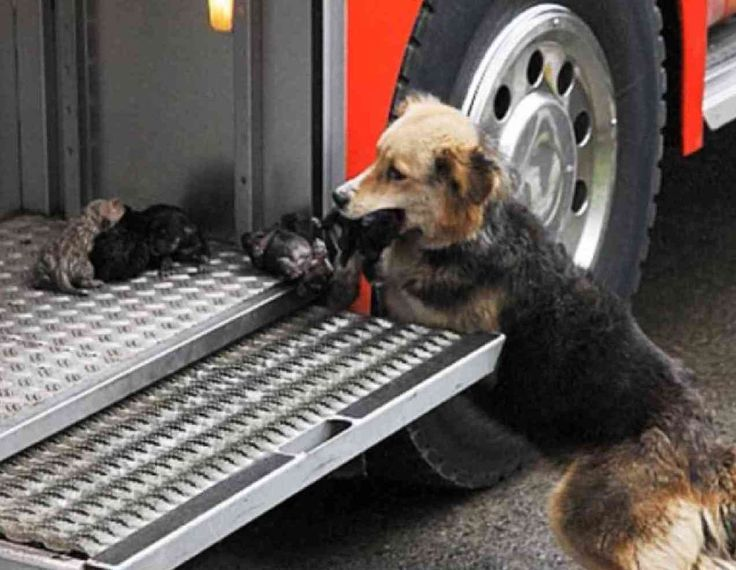 Puppy Rescue: This Mama Is One Hot Dog!  ... from PetsLady.com ... The FUN site for Animal Lovers
