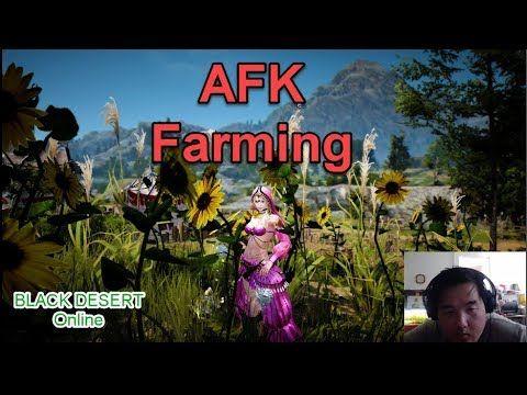 Easy way to make money AFK Farming - BDO   BDO   How to make